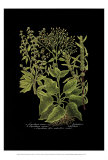 Weinmann Botanical on Black V Posters by Johann Wilhelm Weinmann