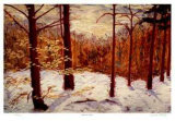 The Red Forest Collectable Print by Robert Pellelt