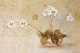 Orchidées dans un bol chinois Affiches par Cheri Blum