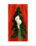 Calla Lilies on Red, 1928 Poster autor Georgia O'Keeffe