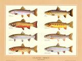 Classic Trout Poster af Joseph Tomelleri