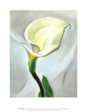 Calla Lily Turned Away, 1923 Affischer av Georgia O'Keeffe