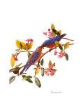 Eastern Bluebird Láminas por Patricia Savage