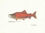 Ron Pittard - Sockeye Fish Umělecké plakáty