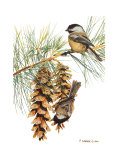 Black Capped Chickadee Posters by Patricia Savage