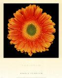 Radiance Poster by Harold Feinstein