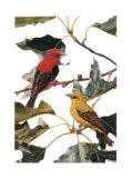 Tangara écarlate Affiches par Patricia Savage