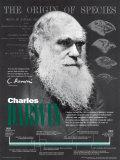 Charles Darwin Affiche