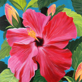 Pink Hibiscus Prints by Sophia Dare Dentiste