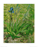 The Iris Print by Vincent van Gogh