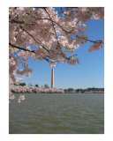 Washington in Pink Photographic Print by Kya Sainsbury-Carter
