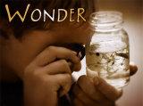 Wonder Art