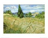 Vincent van Gogh - Pšeničné pole scypřiši, cca1889 Plakát