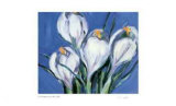 Crocus Blue Limited Edition by Lynn Donoghue