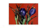 Red Crocus Collectable Print by Lynn Donoghue