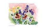 Pink Pansies Limited Edition by Lynn Donoghue