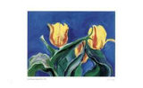 Baroque Tulips Limited Edition by Lynn Donoghue