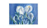 White Crocus Rain Limited Edition by Lynn Donoghue