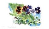Spring Garden / Pansies Collectable Print by Lynn Donoghue