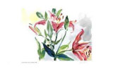 Lilies and Buds Limited Edition by Lynn Donoghue