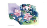 Pink Violets Collectable Print by Lynn Donoghue