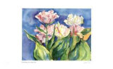 Luca`s Tulips Collectable Print by Lynn Donoghue