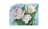 Three Blown Tulips Limited Edition by Lynn Donoghue