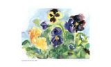 Blue Sky Pansies Collectable Print by Lynn Donoghue