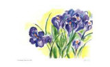 Purple Crocus Limited Edition by Lynn Donoghue