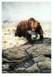 Northwest Legend - Grizzly Bear Collectable Print by Michael Dumas