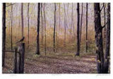 Spring Woodland Collectable Print by J. Vanderbrink