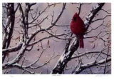 Winter Arrival Edition limitée par J. Vanderbrink