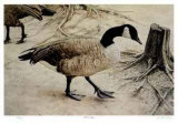 Another Goose Limited Edition by Robert Pellelt