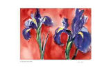 Red Iris Collectable Print by Lynn Donoghue