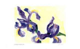Floating Iris Limited Edition by Lynn Donoghue