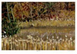 Hidden Pond Collectable Print by Robert Pellelt