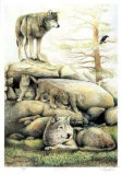 Wolf Family Collectable Print by Robert Pow