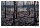 J. Vanderbrink - Hardwood Trail Sběratelské reprodukce
