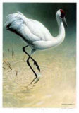 Flood Plane - Whooping Crane Limited Edition by Michael Dumas