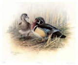 Wood Ducks Collectable Print by James Fenwick Lansdowne