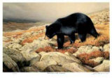 Black Bear in the Chickchocs Limited Edition by Claudio D'Angelo
