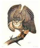 Great Horned Owl Collectable Print by James Fenwick Lansdowne