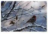 Winter is Upon Us Edition limitée par J. Vanderbrink