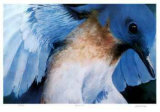Blue Bird Collectable Print by Carl Arlen
