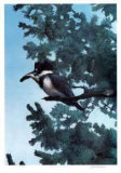 Western King Fisher Limited Edition by Carl Arlen