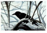 Raven Collectable Print by Carl Arlen