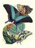 Butterflies III Print by E. A. Seguy