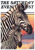 Cebras Láminas por Jack Murray
