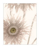 Gerbera Breeze II Art by Donna Geissler