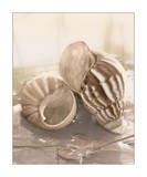 Seashore Achatina Prints by Donna Geissler